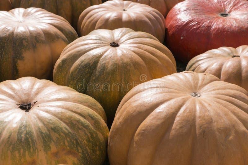 Σωρός των διάφορων κολοκυθών στο φεστιβάλ συγκομιδών υπόβαθρο, λαχανικά στοκ φωτογραφίες
