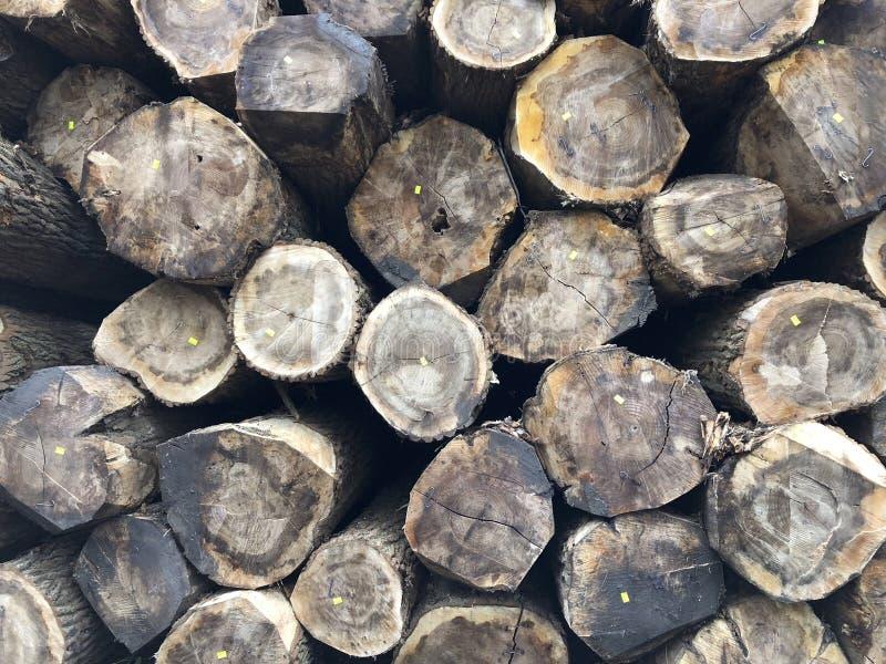 Σωρός των κούτσουρων δέντρων στοκ φωτογραφίες με δικαίωμα ελεύθερης χρήσης