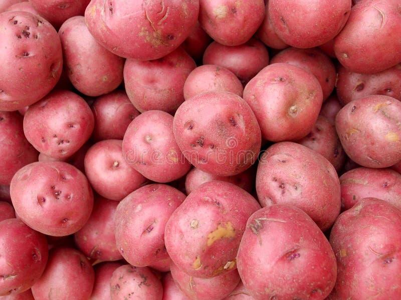 Σωρός των κόκκινων πατατών στοκ εικόνες με δικαίωμα ελεύθερης χρήσης