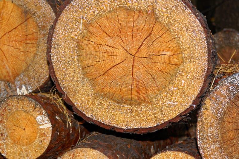 Σωρός των ξύλινων κούτσουρων Ξύλινο υπόβαθρο σύστασης κούτσουρων κλείστε επάνω στοκ φωτογραφία με δικαίωμα ελεύθερης χρήσης