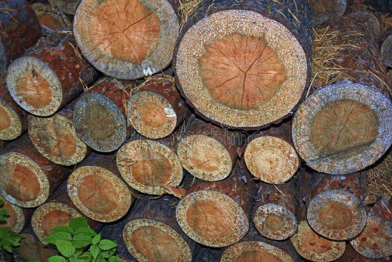 Σωρός των ξύλινων κούτσουρων Ξύλινο υπόβαθρο σύστασης κούτσουρων κλείστε επάνω στοκ εικόνες