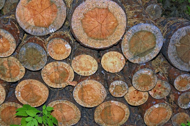 Σωρός των ξύλινων κούτσουρων Ξύλινο υπόβαθρο σύστασης κούτσουρων κλείστε επάνω στοκ εικόνα με δικαίωμα ελεύθερης χρήσης