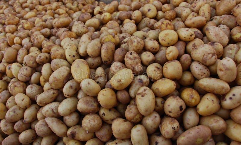 Σωρός των πατατών στην πόλη της Καζαμπλάνκα, Μαρόκο στοκ φωτογραφίες με δικαίωμα ελεύθερης χρήσης