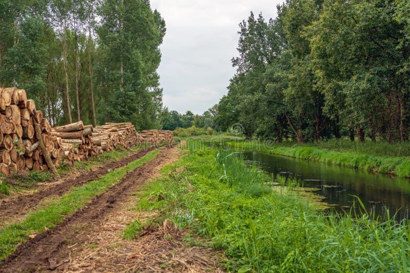 Σωρός των παχιών κορμών δέντρων στην άκρη το δάσος στοκ φωτογραφία με δικαίωμα ελεύθερης χρήσης