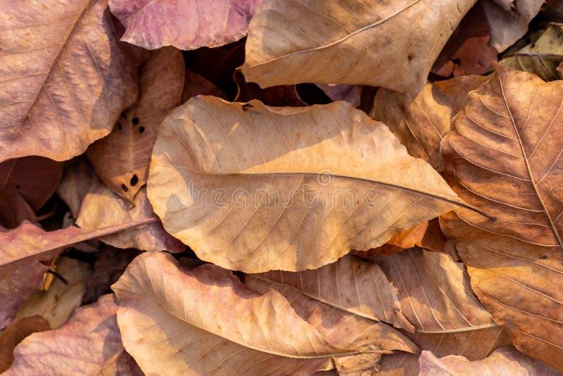 σωρός των πεσμένων ξηρών φύλλων φθινοπώρου για το υπόβαθρο στοκ εικόνα