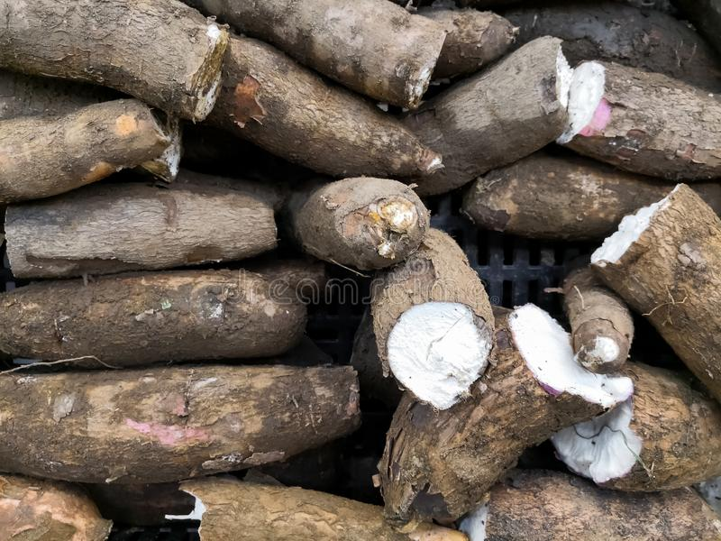Σωρός των ριζών μανιόκων που συσσωρεύονται σε μια αγορά Παραδοσιακά τρόφιμα στη Νότια Αμερική στοκ εικόνες με δικαίωμα ελεύθερης χρήσης
