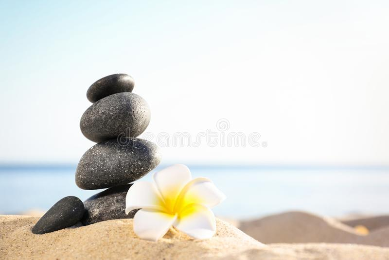 Σωρός των σκοτεινών πετρών και του όμορφου λουλουδιού στην αμμώδη παραλία κοντά στη θάλασσα Έννοια της Zen στοκ εικόνες