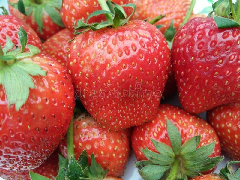 Σωρός των φρέσκων ώριμων φρούτων φραουλών με πράσινο sepal στοκ φωτογραφία