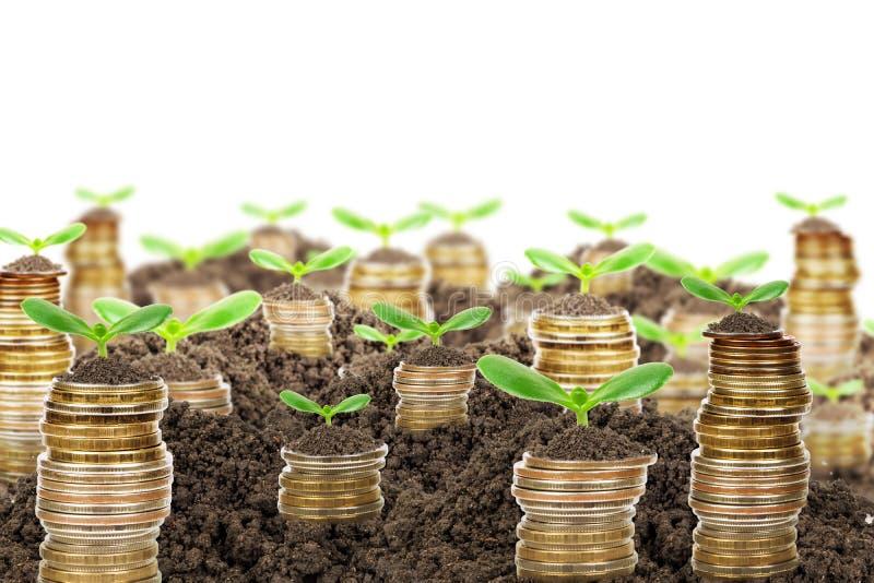 Σωρός των χρυσών νομισμάτων με το έδαφος και τις πράσινες εγκαταστάσεις στοκ εικόνα