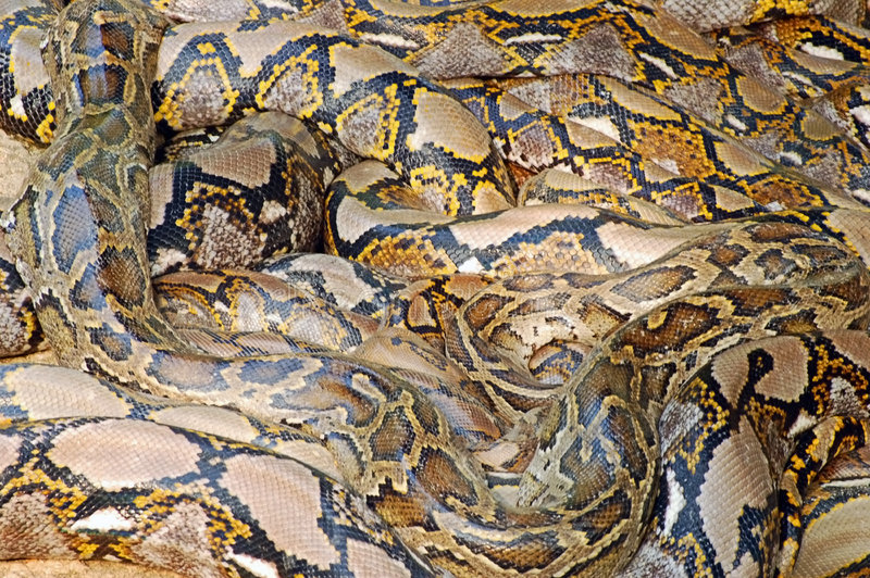 Download σωρός python στοκ εικόνες. εικόνα από φρικτός, backfill - 1533524