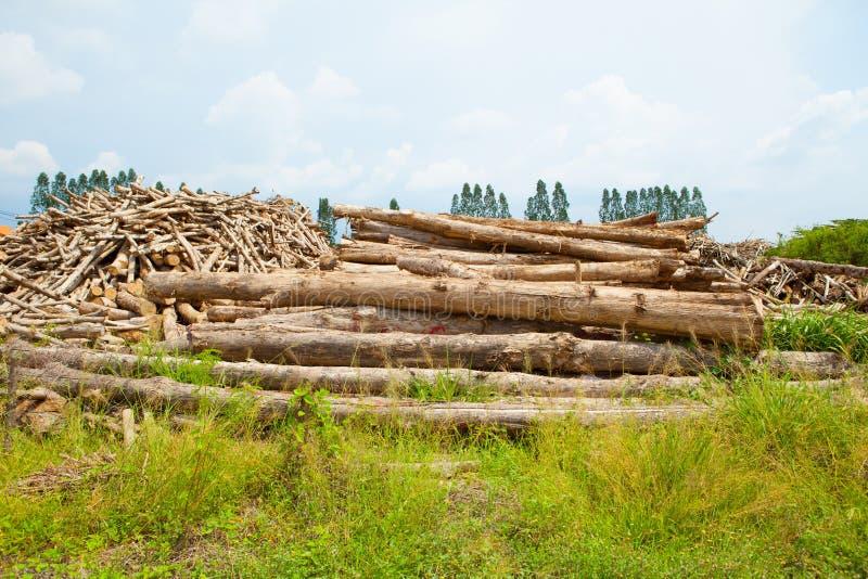 Σωρός teak του ξύλινου κούτσουρου στοκ εικόνα με δικαίωμα ελεύθερης χρήσης