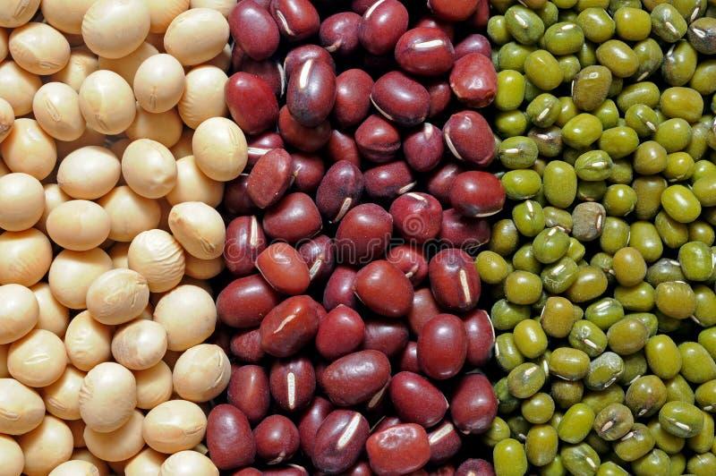 Σόγια, κόκκινο, και mung φασόλι στοκ φωτογραφία με δικαίωμα ελεύθερης χρήσης