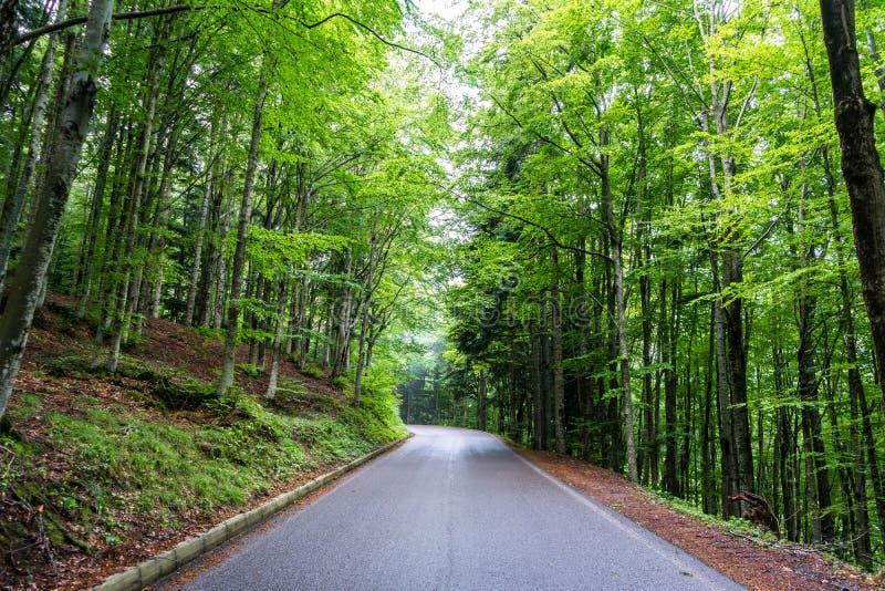 Σύγχρονος δρόμος βουνών μέσα σε ένα δάσος 6 στοκ εικόνα με δικαίωμα ελεύθερης χρήσης