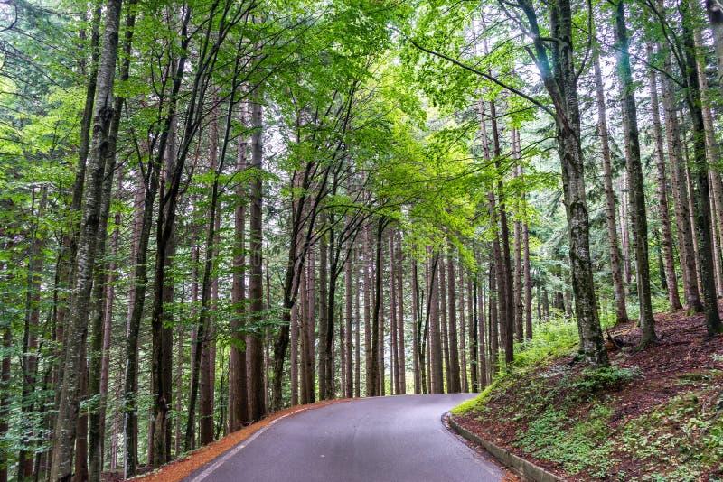 Σύγχρονος δρόμος βουνών μέσα σε ένα δάσος 5 στοκ φωτογραφία με δικαίωμα ελεύθερης χρήσης