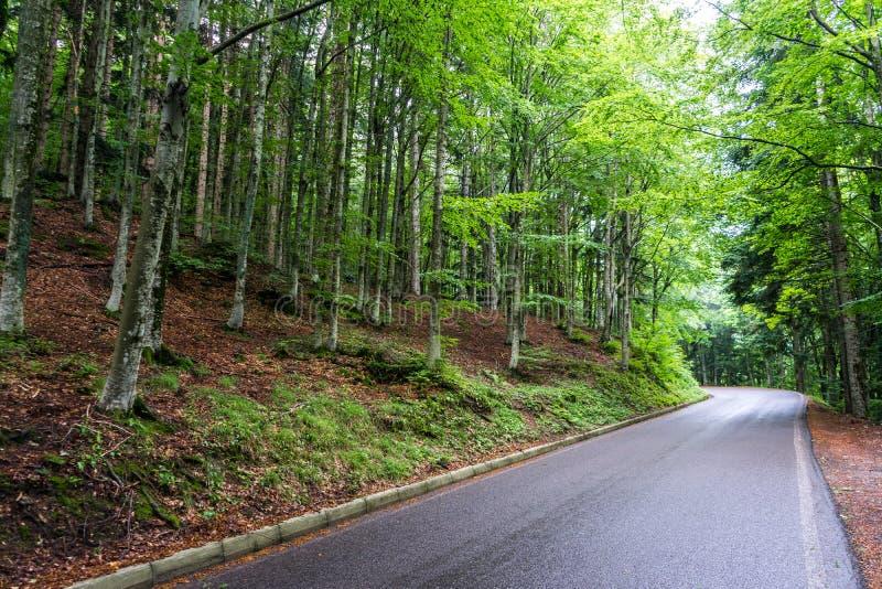 Σύγχρονος δρόμος βουνών μέσα σε ένα δάσος 4 στοκ φωτογραφίες με δικαίωμα ελεύθερης χρήσης