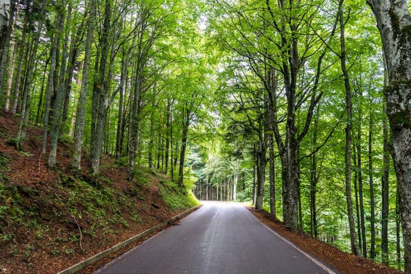 Σύγχρονος δρόμος βουνών μέσα σε ένα δάσος στοκ εικόνα με δικαίωμα ελεύθερης χρήσης