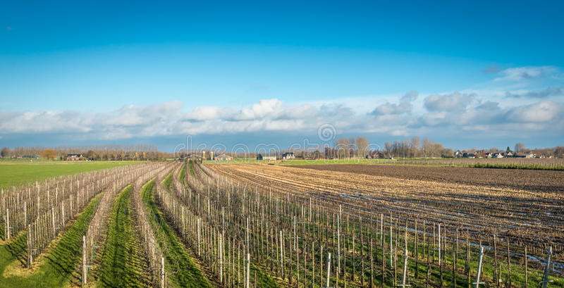 Σύγχρονος οπωρώνας μήλων στην αρχή της χειμερινής εποχής στοκ φωτογραφία με δικαίωμα ελεύθερης χρήσης
