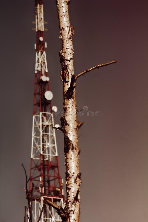 Σύγχρονος πύργος τηλεπικοινωνιών και δασικό tundra στοκ εικόνα με δικαίωμα ελεύθερης χρήσης