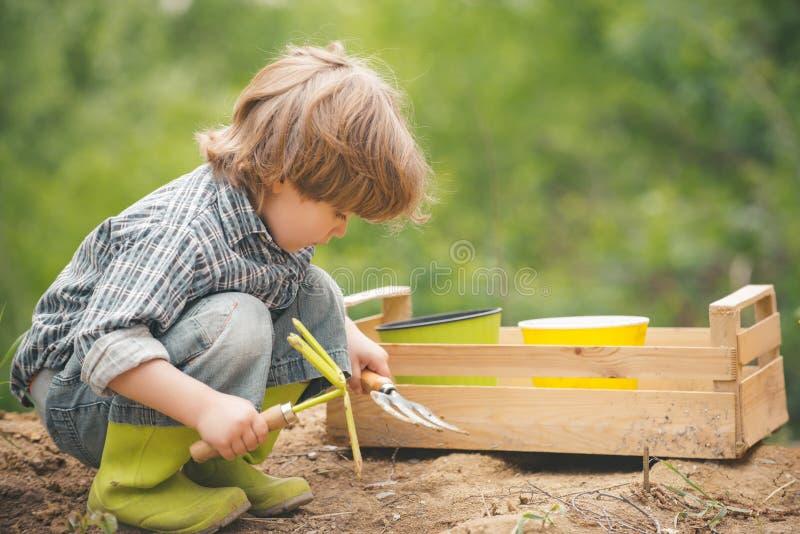 Σύλληψη Μικρός κηπουρός Το αγόρι καλλιεργεί βιολογικά λαχανικά Χρόνια πολλά στον κήπο Υγιεινά τρόφιμα στοκ εικόνες