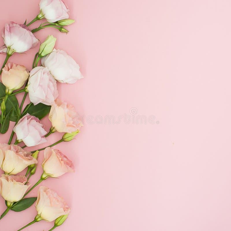 Σύνθεση λουλουδιών Πλαίσιο φιαγμένο από ρόδινα ροδαλά λουλούδια Επίπεδος βάλτε, τοπ άποψη, διάστημα αντιγράφων στοκ εικόνα με δικαίωμα ελεύθερης χρήσης
