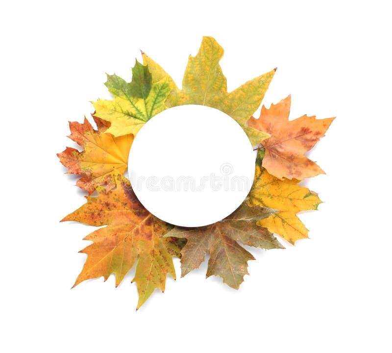 Σύνθεση με τα φύλλα φθινοπώρου και διάστημα για το κείμενο στο άσπρο υπόβαθρο, τοπ άποψη στοκ εικόνα με δικαίωμα ελεύθερης χρήσης
