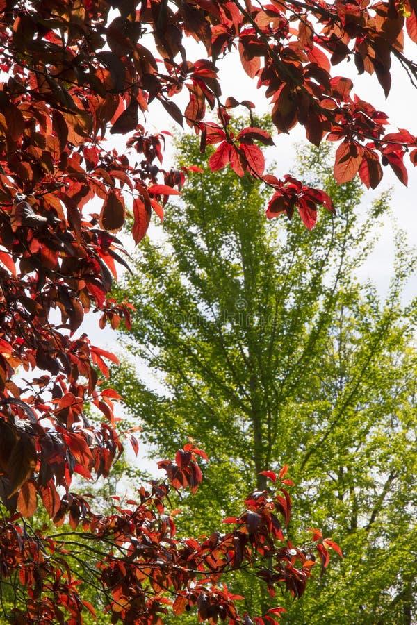 Σύνθεση με τα φύλλα και τη λεύκα δαμάσκηνων κερασιών στοκ φωτογραφίες