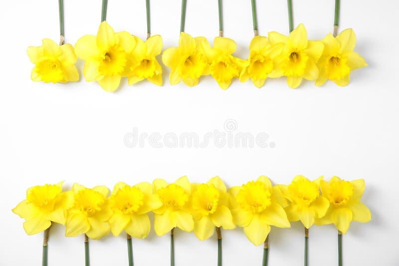 Σύνθεση με τα daffodils στο άσπρο υπόβαθρο, τοπ άποψη Φρέσκα λουλούδια άνοιξη στοκ εικόνα