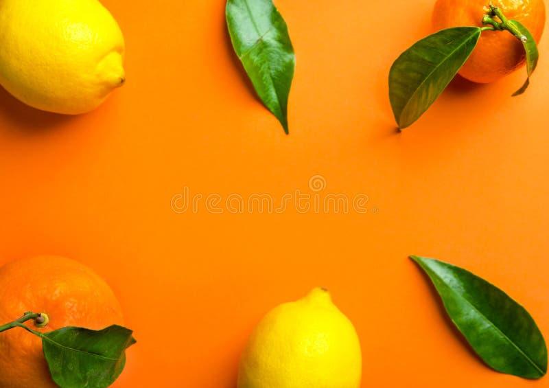 Σύνθεση πλαισίων από φρέσκα ακατέργαστα tangerines λεμονιών πορτοκαλιών εσπεριδοειδών στον κλάδο με τα πράσινα φύλλα Υγιείς βιταμ στοκ εικόνα