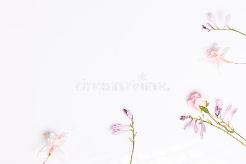 Σύνθεση των φευκτών λουλουδιών στο λευκό φόντο Προβολή 'Γενικά έξοδα' στοκ εικόνα με δικαίωμα ελεύθερης χρήσης