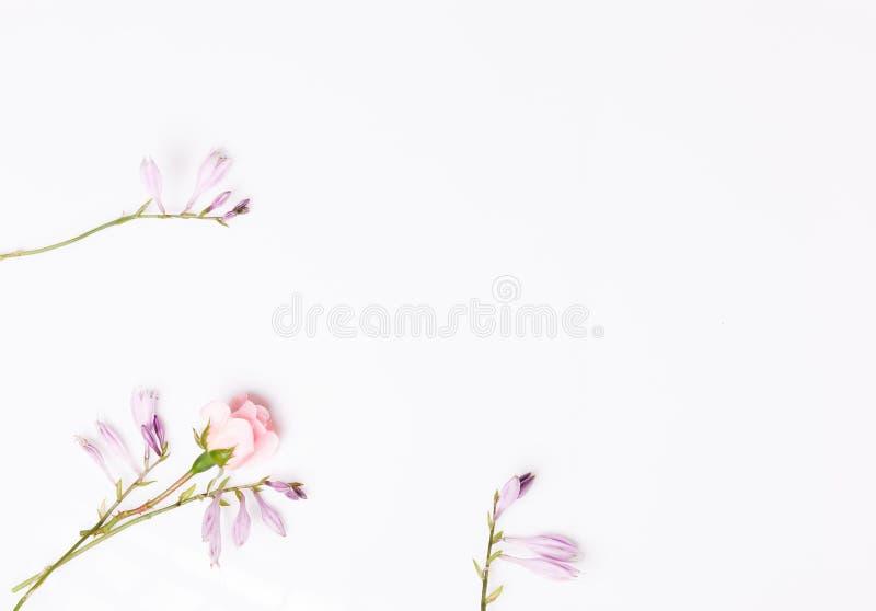 Σύνθεση των φευκτών λουλουδιών στο λευκό φόντο Προβολή 'Γενικά έξοδα' στοκ εικόνα