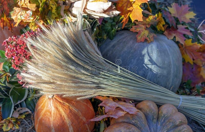 Σύνθεση φθινοπώρου με τις κολοκύθες, τα φύλλα σφενδάμου και τα αυτιά του σίτου στοκ εικόνες