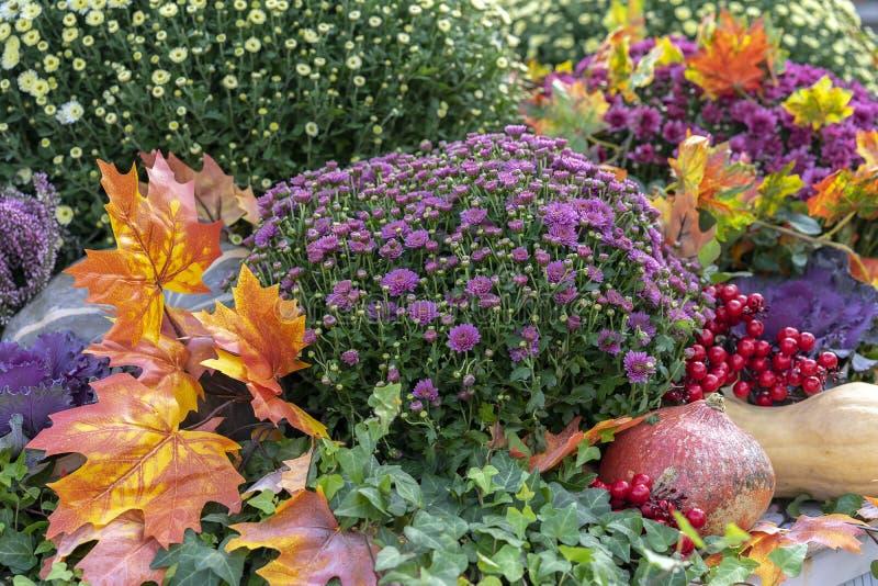Σύνθεση φθινοπώρου με τις κολοκύθες, τα asters, τα μούρα και τα φύλλα σφενδάμου στοκ φωτογραφία