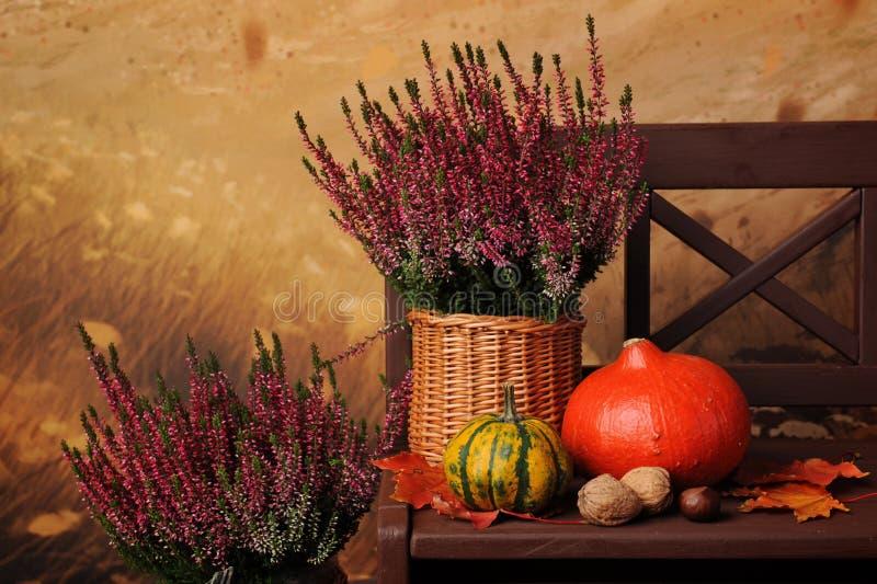 Σύνθεση φθινοπώρου με τις πορτοκαλιές κολοκύθες και την ερείκη στοκ φωτογραφίες με δικαίωμα ελεύθερης χρήσης