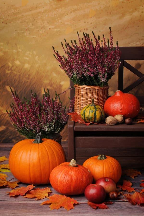 Σύνθεση φθινοπώρου με τις πορτοκαλιές κολοκύθες και την ερείκη στοκ φωτογραφία με δικαίωμα ελεύθερης χρήσης