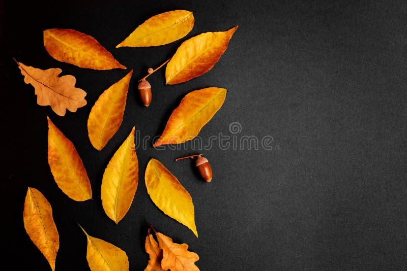 Σύνθεση φθινοπώρου με το χρυσό σφένδαμνο και τα δρύινα φύλλα στη μαύρη ΤΣΕ στοκ εικόνες