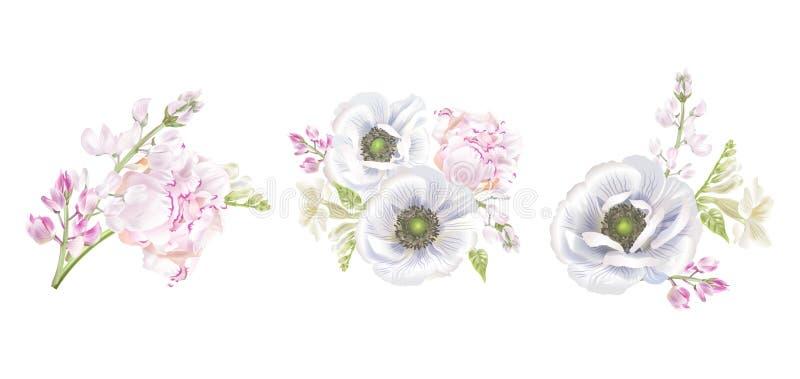 Σύνθεση anemone Peony διανυσματική απεικόνιση