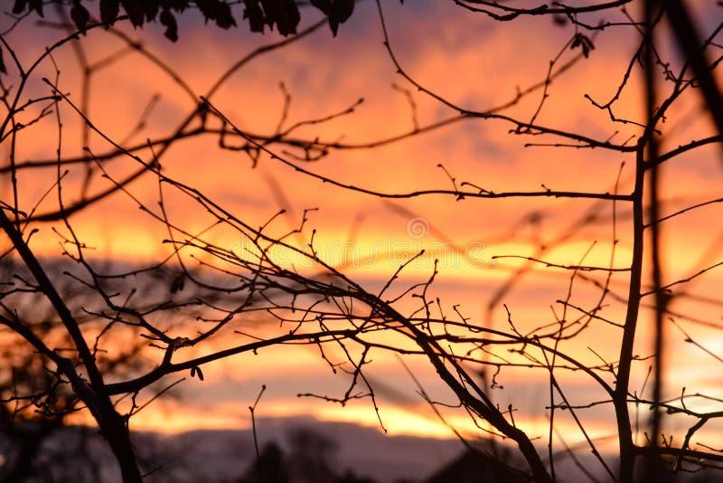 Σύνθετα κλαδιά στον πορτοκαλί ουρανό στοκ φωτογραφία με δικαίωμα ελεύθερης χρήσης