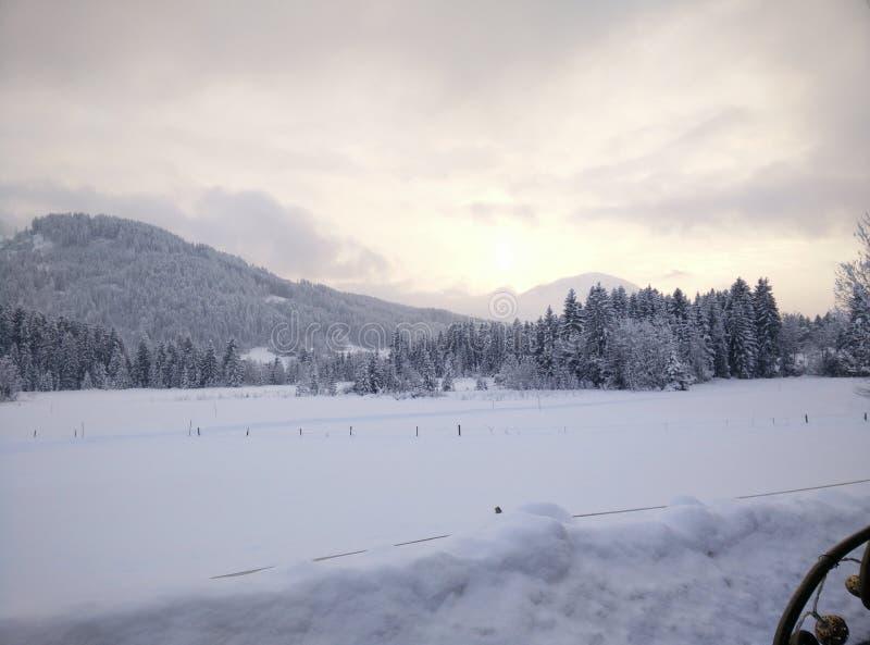 26 σύνθετα ψηφιακά τεράστια χιονώδη δέντρα μεγέθους mpix πανοραμικά βλασταημένα στοκ εικόνες