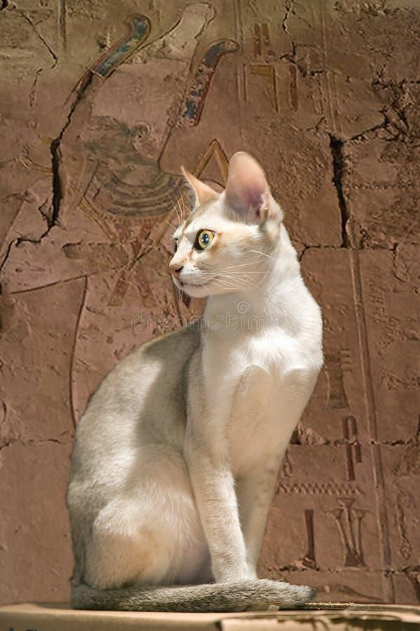 Σύνθετη εικόνα μιας ιερής αιγυπτιακής γάτας ναών σε ένα αρχαίο δωμάτιο με το hieroglyphics στοκ φωτογραφίες με δικαίωμα ελεύθερης χρήσης