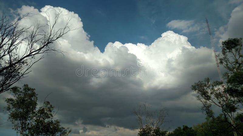 Σύννεφα δέντρων Υ στοκ φωτογραφία με δικαίωμα ελεύθερης χρήσης