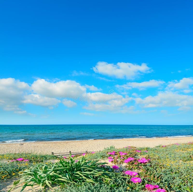 Σύννεφα πέρα από τα ρόδινα λουλούδια στοκ φωτογραφία με δικαίωμα ελεύθερης χρήσης
