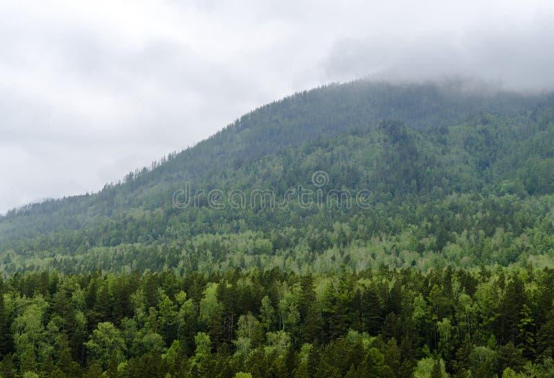 Σύννεφα πέρα από το taiga στη Σιβηρία στοκ εικόνες