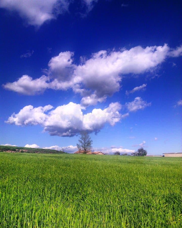 Σύννεφα στον τομέα στοκ φωτογραφία με δικαίωμα ελεύθερης χρήσης