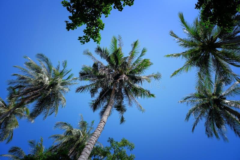 Σύννεφα φοινίκων και μπλε ουρανού καρύδων στοκ φωτογραφία με δικαίωμα ελεύθερης χρήσης
