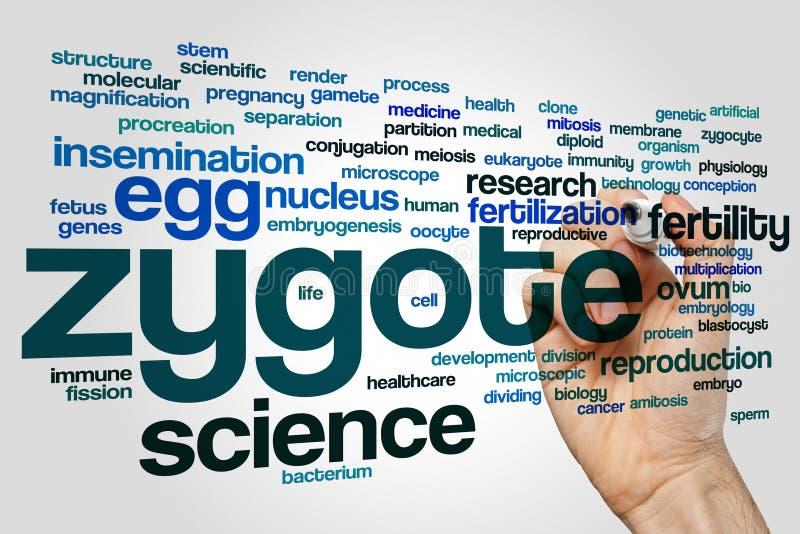 Σύννεφο λέξης Zygote στοκ φωτογραφία με δικαίωμα ελεύθερης χρήσης