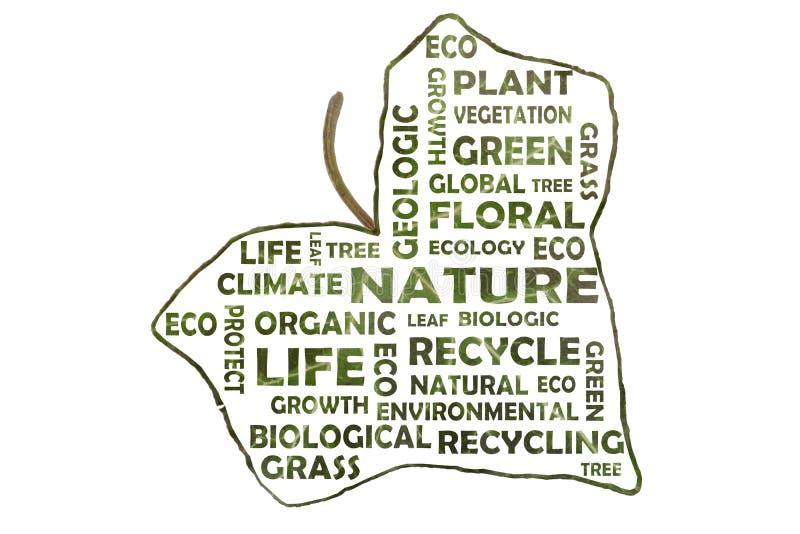 Σύννεφο λέξης για την οικολογία υπό μορφή φύλλου κισσών απεικόνιση αποθεμάτων