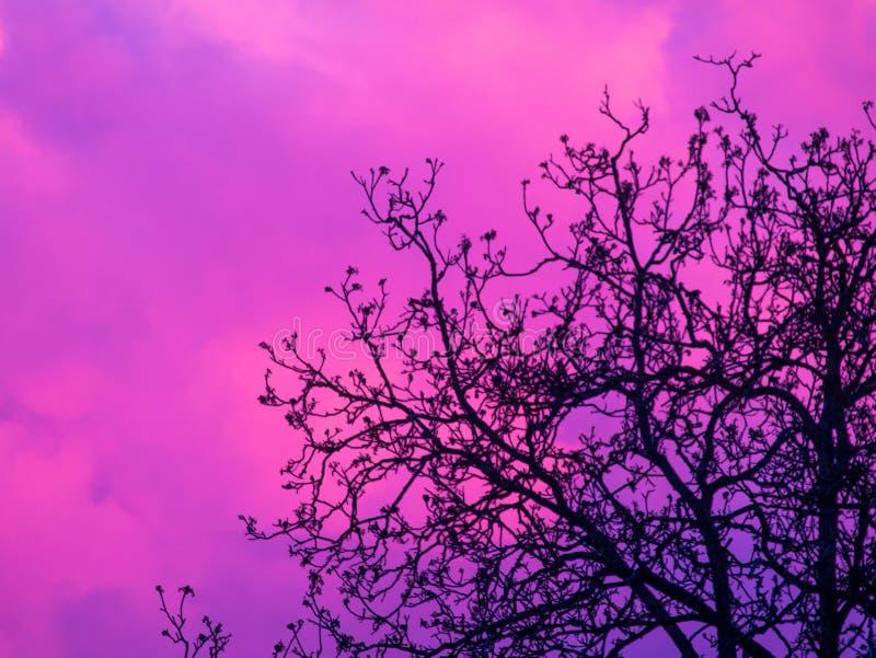 Σύννεφο πίσω από το δέντρο στοκ εικόνα με δικαίωμα ελεύθερης χρήσης