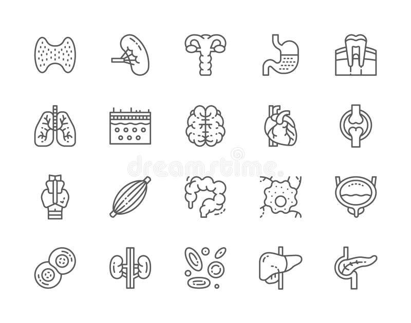 Σύνολο ανθρώπινων εικονιδίων γραμμών οργάνων Σπλήνα, στομάχι, πνεύμονες, εγκέφαλος, καρδιά και περισσότεροι διανυσματική απεικόνιση