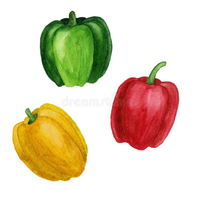 Σύνολο απεικόνισης watercolor πιπεριών κουδουνιών που απομονώνεται σε ένα άσπρο υπόβαθρο στοκ εικόνα με δικαίωμα ελεύθερης χρήσης