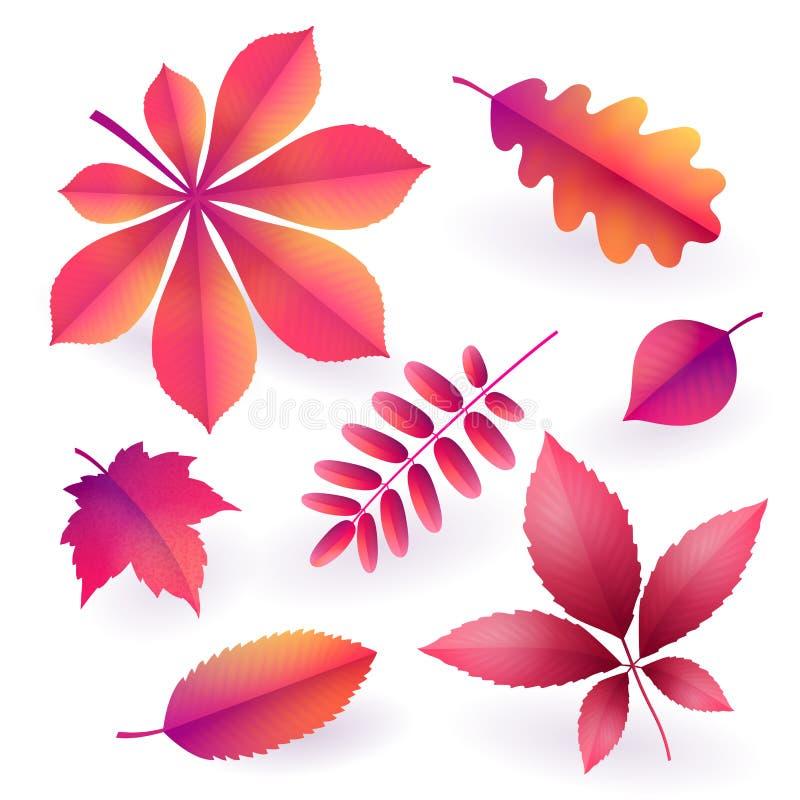 Σύνολο απομονωμένων φωτεινών ρόδινων πεσμένων φθινόπωρο φύλλων Στοιχεία του φυλλώματος πτώσης διάνυσμα διανυσματική απεικόνιση